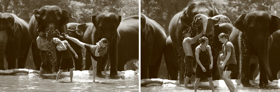 Robyn Klenk - Sylvie von Duuglas-Ittu Elephants