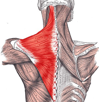 Shoulder Neck Muscles Exercises Exercise-neck-muscles-02