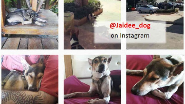 Jaidee on Instagram2
