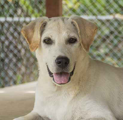 Soi Dog Foundatin - Ivory 1