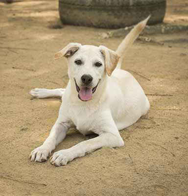 Soi Dog Foundatin - Ivory 2