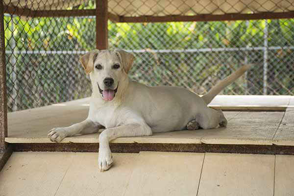 Soi Dog Foundatin - Ivory 4
