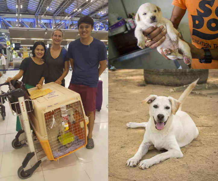 Soi Dog Foundation - Become a Flight Volunteer