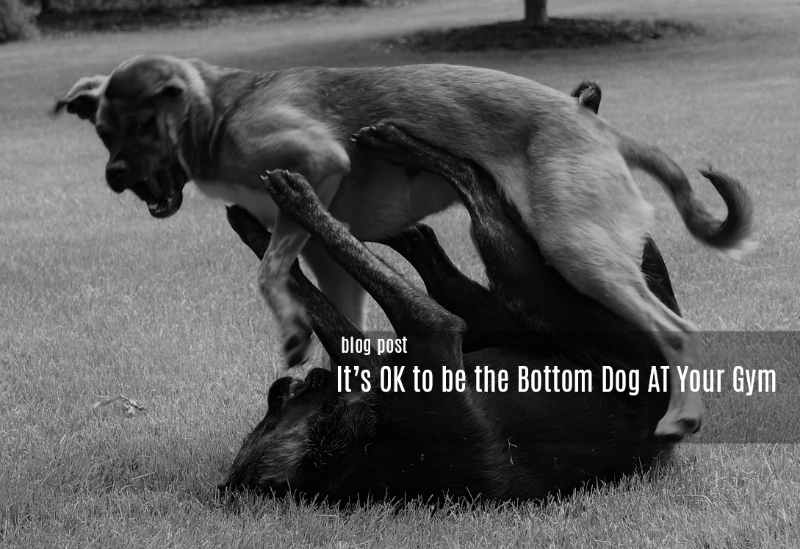 It's Ok to be Bottom Dog