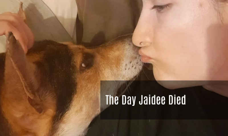 The Day Jaidee Died - Soi Dog